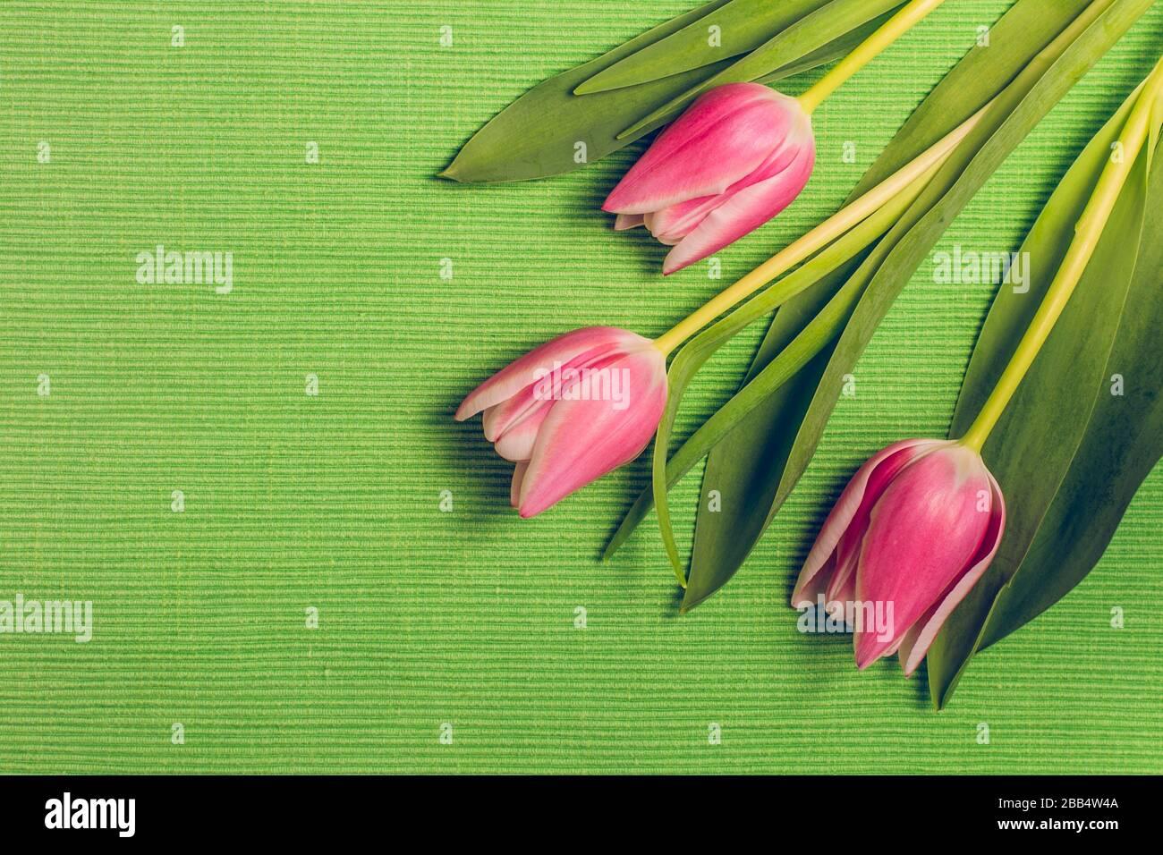 Drei frische rosafarbene Tulpenblumen mit Blättern auf grünem Tischtuch mit Textur, Kopierraum, flachem Layout Federschmuck in Pastellfarben. Stockfoto