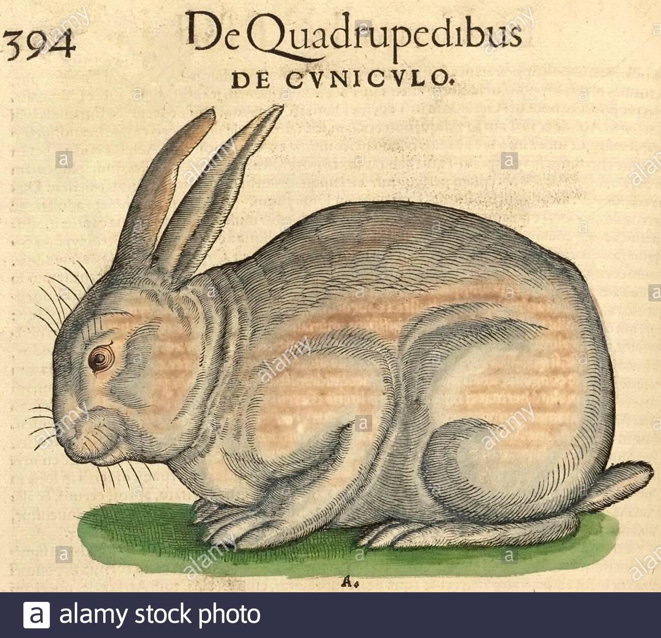Kaninchen Chromolithographie 1895 alte historische Grafik