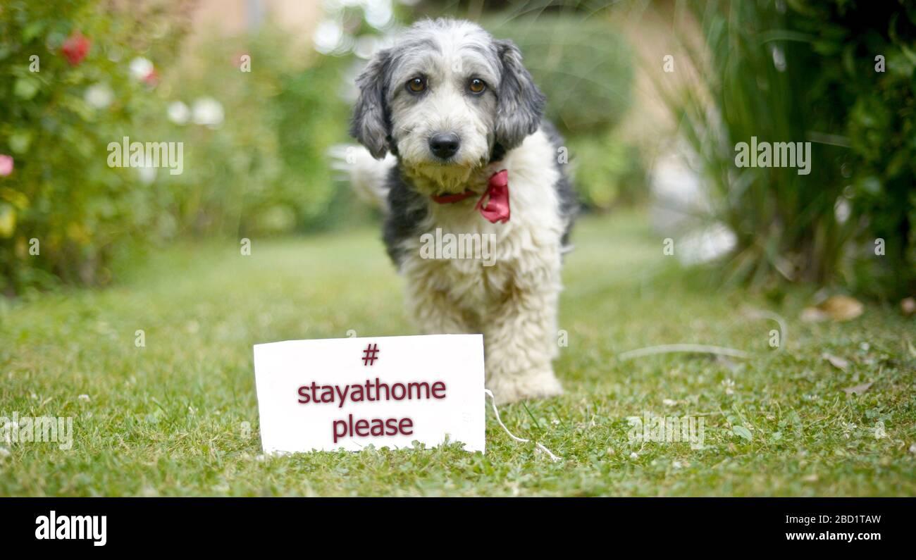 Der süße schwarz-weiße adoptierte streunende Hund auf einem grünen Gras Stockfoto