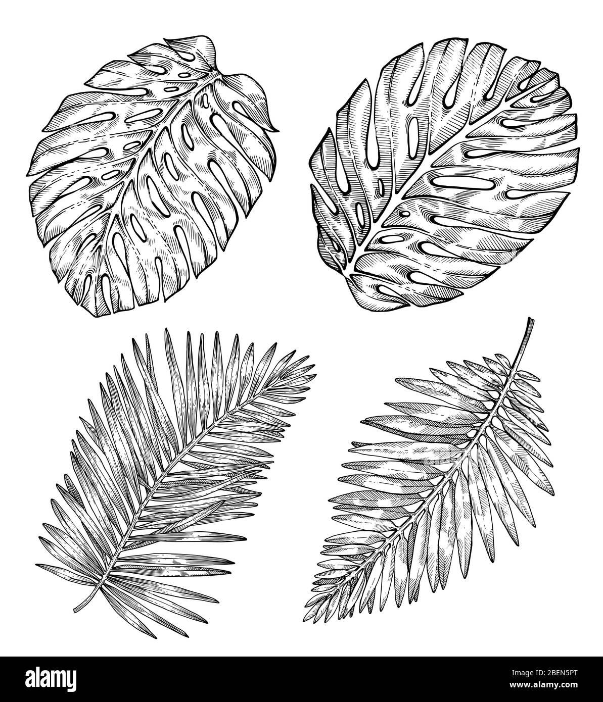 Handgezeichnete tropische Palmenblätter. Skizze auf weißem Hintergrund. Exotische Gravur Dekoration für Textil, Oberflächengestaltung oder Banner. Tolle Vorlage für Stock Vektor