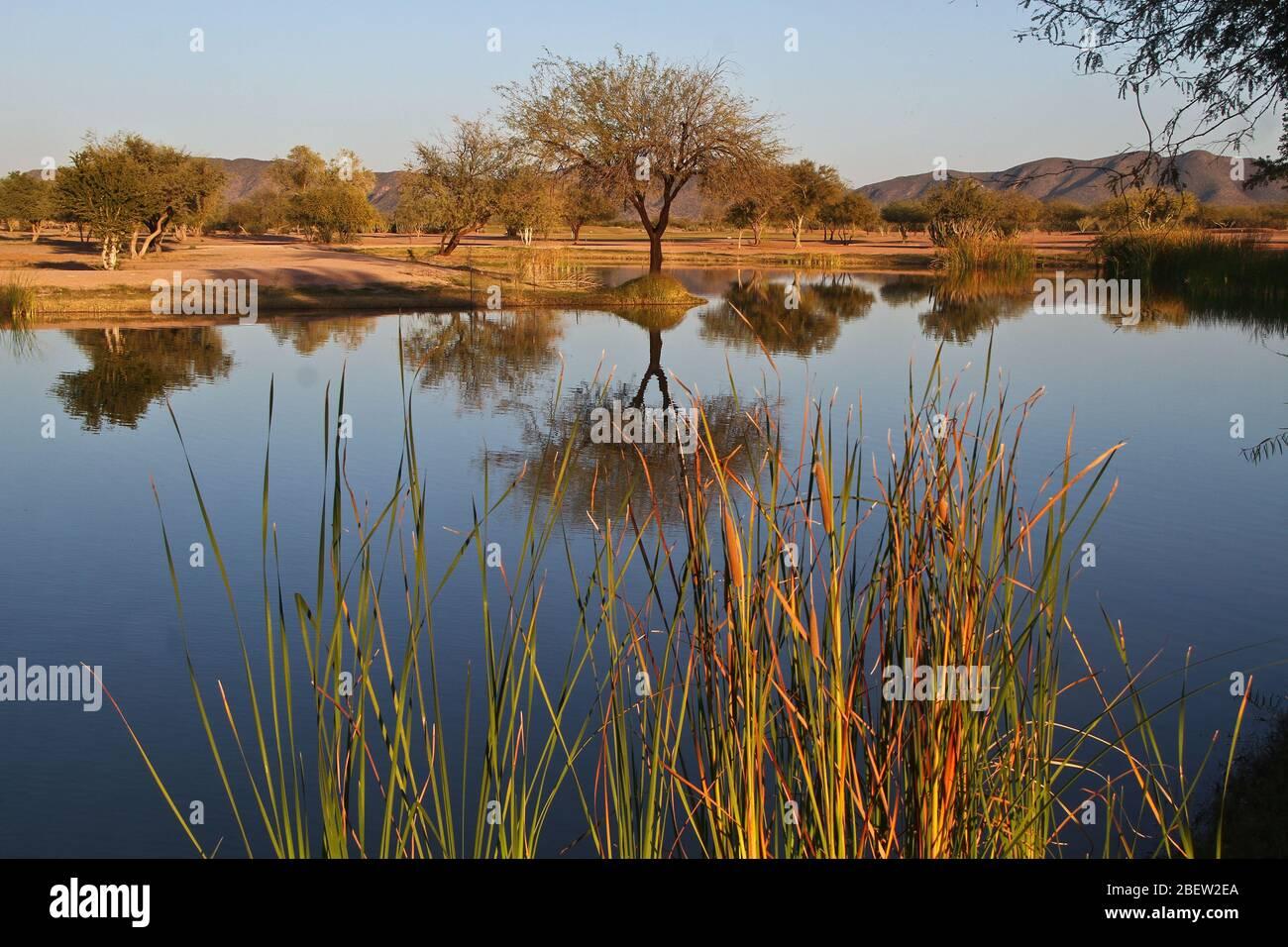 Club de Golf estilo desertico en el real de Catorce (Foto:LuisGutierrez/NortePhoto.com) Stockfoto