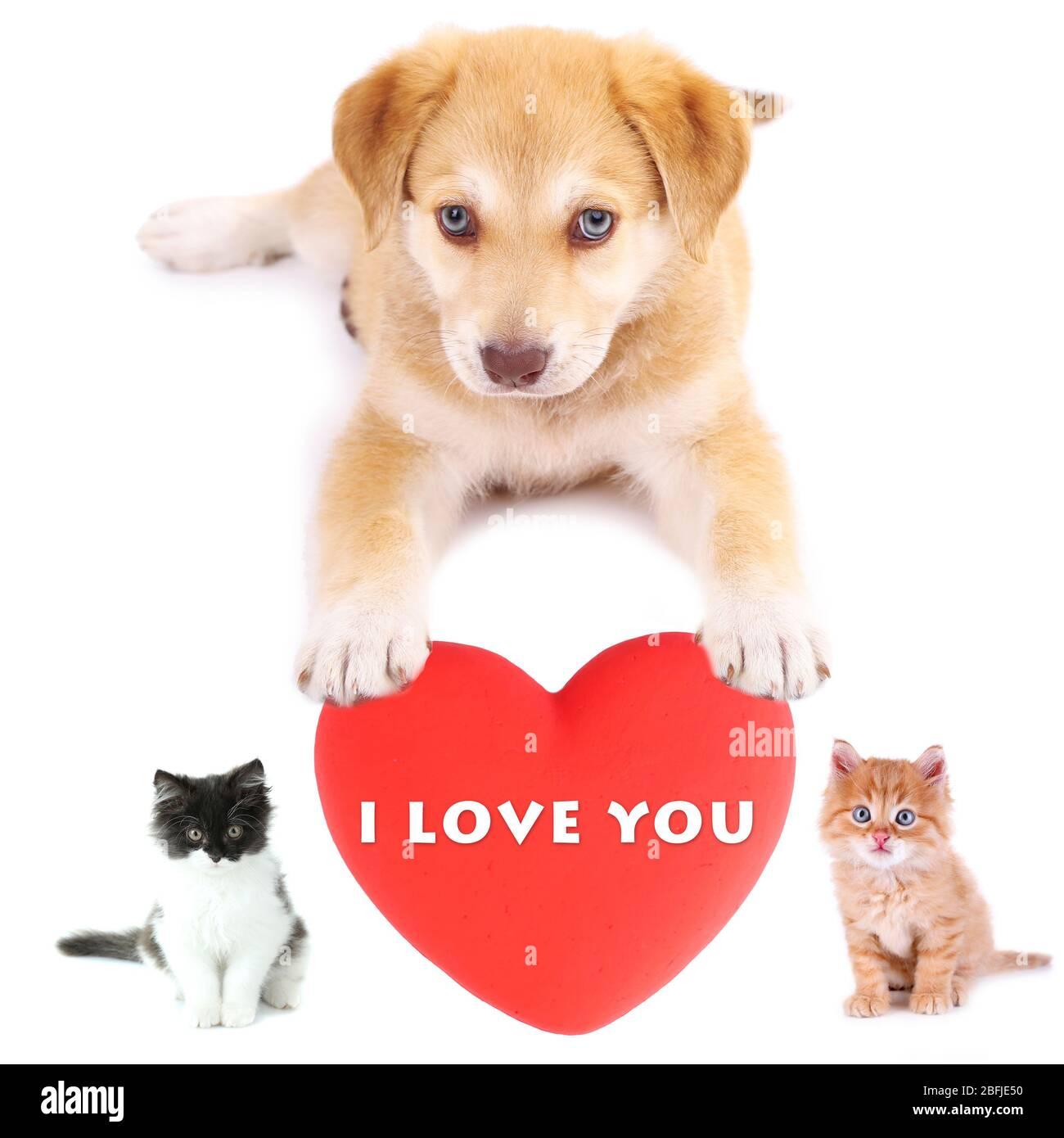 Niedliche Haustiere mit großem Herz isoliert auf weiß Stockfoto