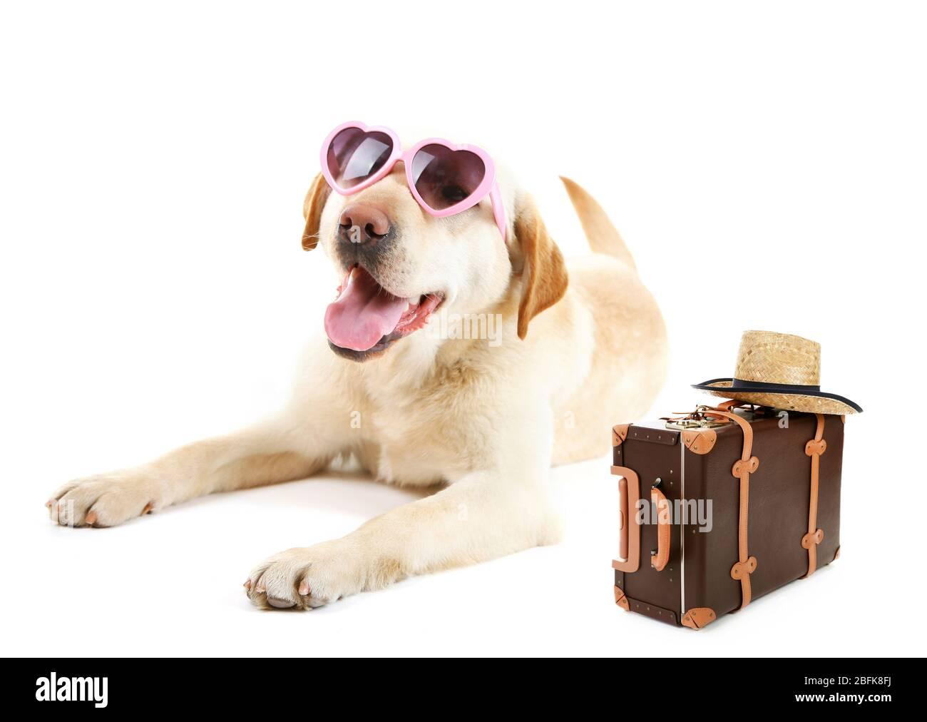 Lustige Hundetourist mit Sonnenbrille, Koffer und Hut, isoliert auf weiß Stockfoto