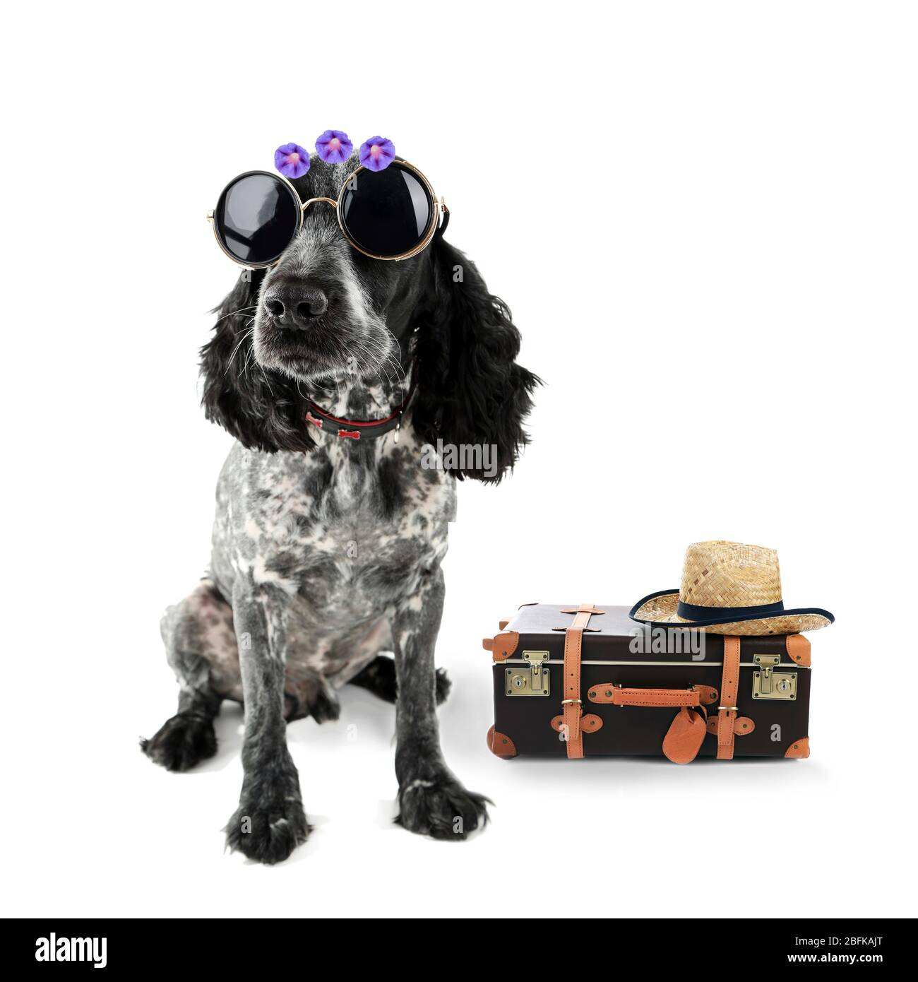 Lustige Hundetourist mit Koffer, Sonnenbrille und Hut, isoliert auf weiß Stockfoto