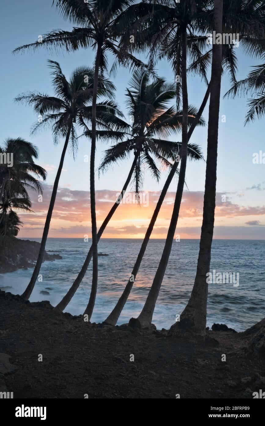 Sonnenaufgangs Silhouetten die Palmenlandschaft entlang der Puna Küste auf der Big Island von Hawaii. Stockfoto