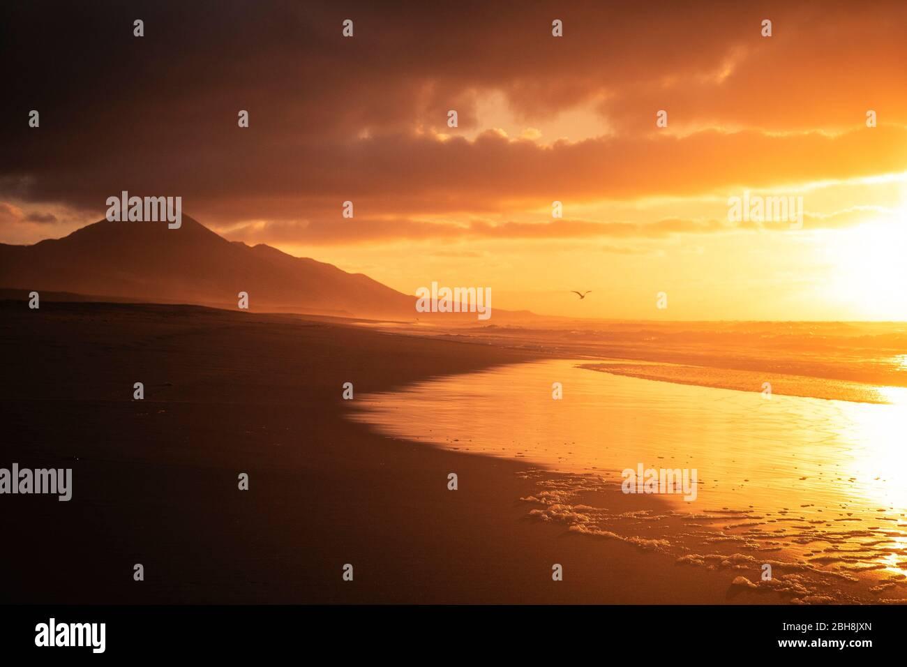 Goldener schöner roter Sonnenuntergang am Strand mit Möwenfliegen für Freiheit und Urlaubskonzept - niemand in tropischer wilder landschaftlicher Lage mit Meer und Bergen - ruhige und friedliche Landschaft an den Sommerferienküsten Stockfoto