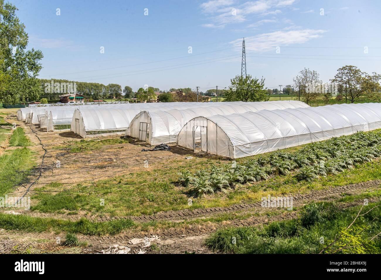 """Ferrara, Italien. 22 April 2020. Gewächshäuser mit Obst und Gemüse in der """"Casa di Stefano"""" (Haus Stefano) Erholungsgemeinschaft in Ferrara, Ita Stockfoto"""