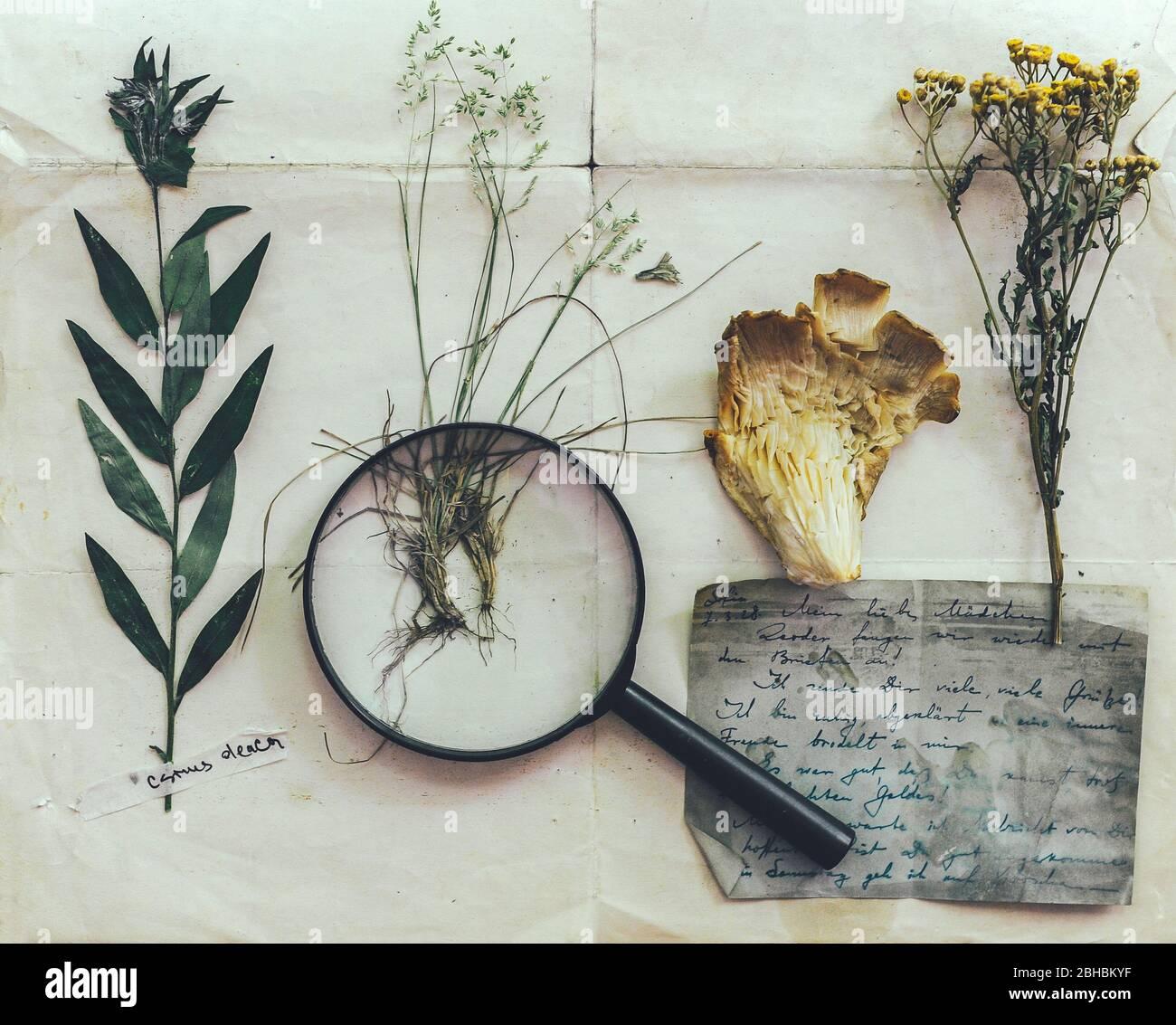 Herbier Stockfotos und  bilder Kaufen   Alamy