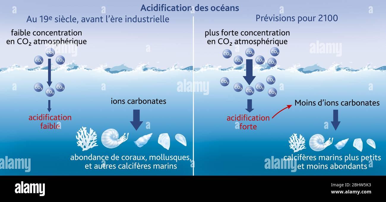 Versauerung des Ozeans Stockfoto