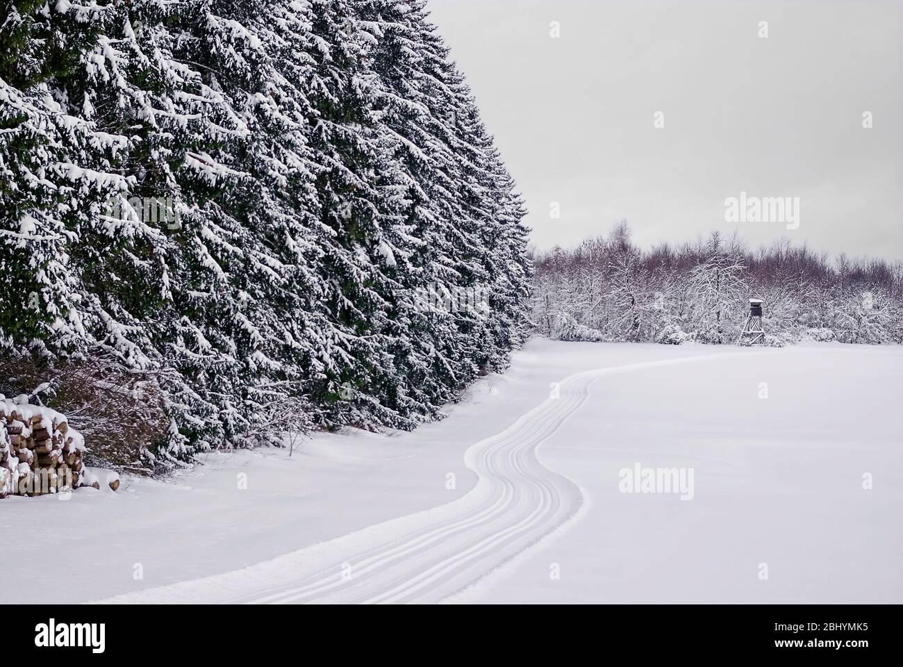 Winterwald mit frisch präparierter Loipe, die über die Felder schlängelt. Stockfoto