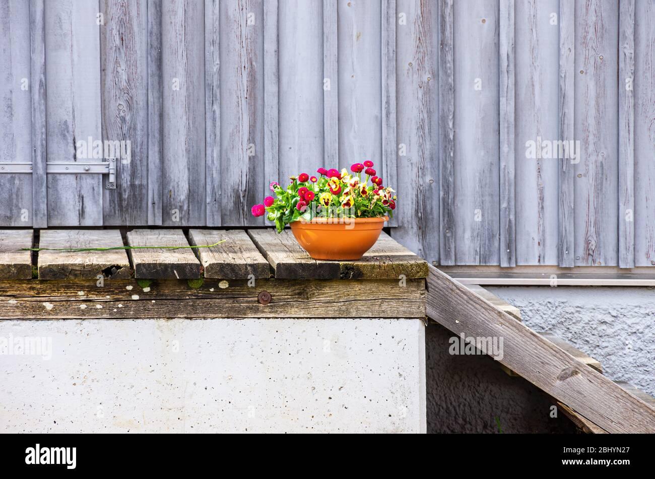 Ein Blumentopf auf einer Rampe vor einem ländlichen Stallgebäude. Stockfoto