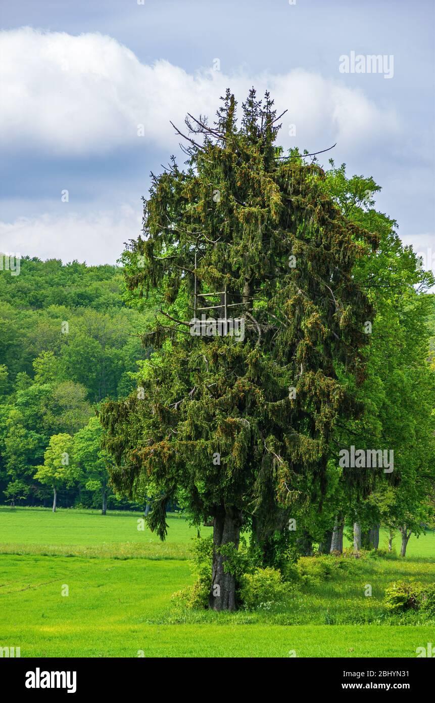 Baumhaus in einem Baum in ländlicher Umgebung. Stockfoto