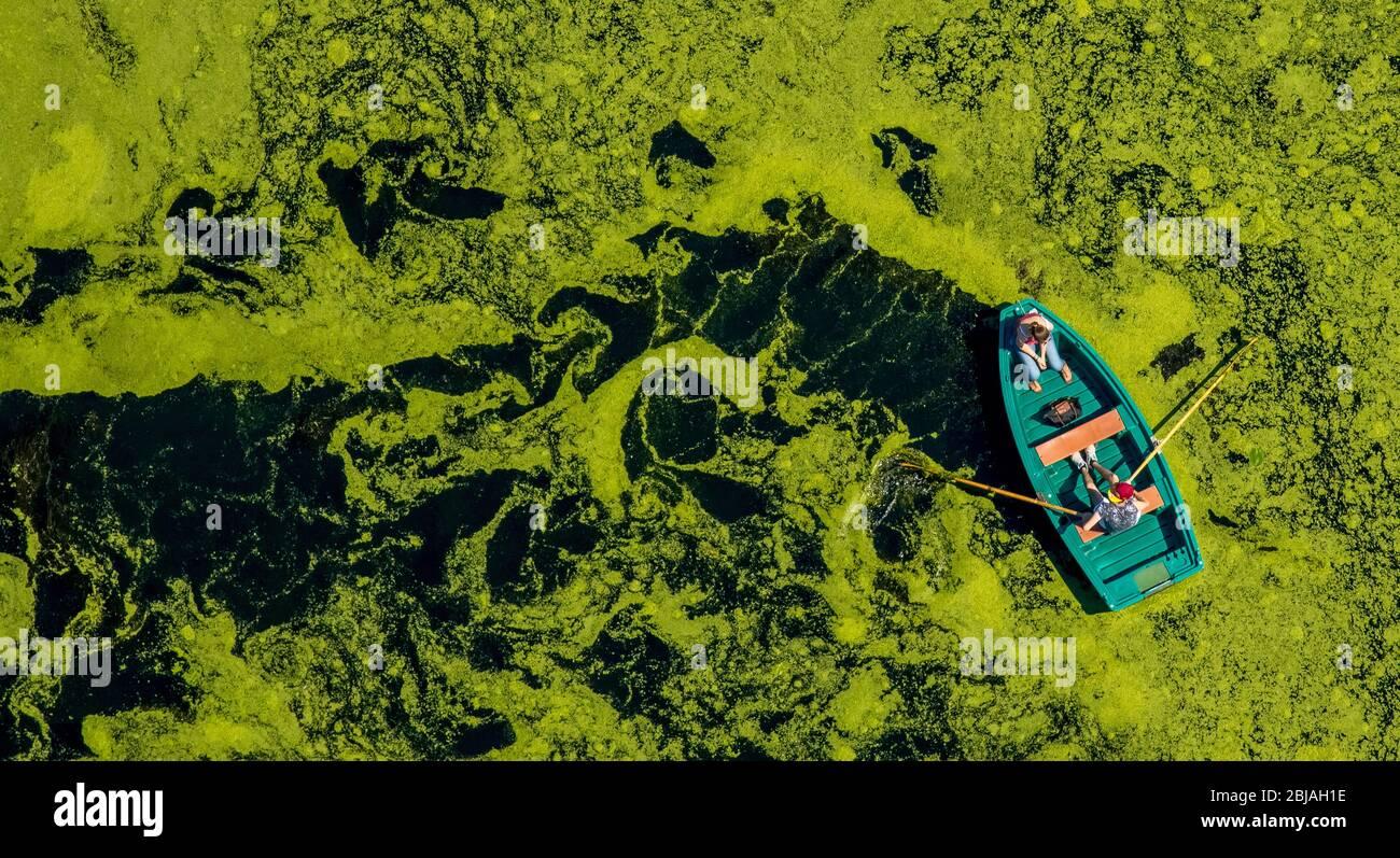 , Ruderboot am Oelbachsee in Witten, 19.07.2016, Luftaufnahme, Deutschland, Nordrhein-Westfalen, Ruhrgebiet, Witten Stockfoto