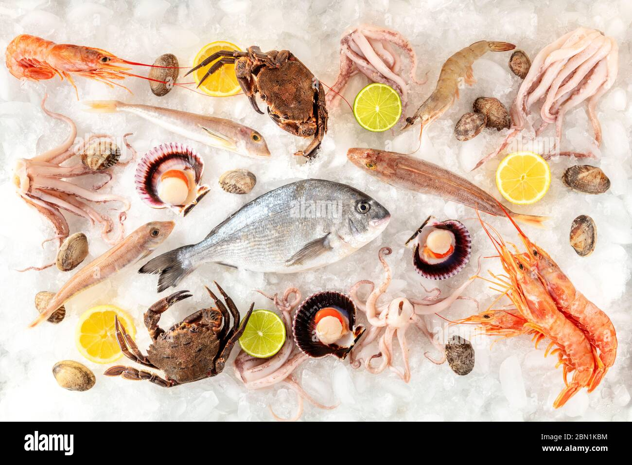 Fisch- und Meeresfrüchtevielfalt flach gelegt, von oben auf weißem Hintergrund geschossen, auf Eis, mit Zitronen und Limetten Stockfoto