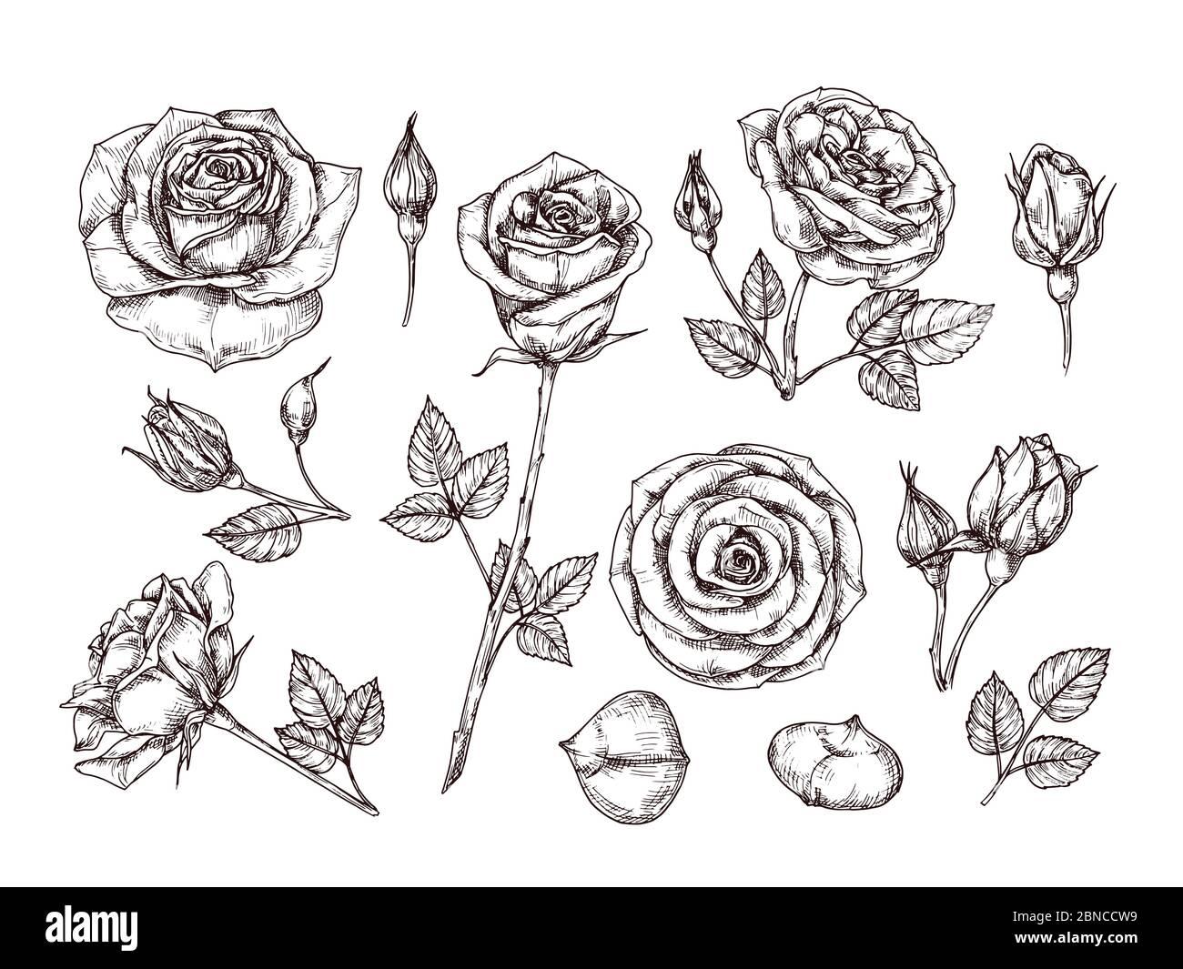 Mit dornen zeichnen rose VIDEO: Eine