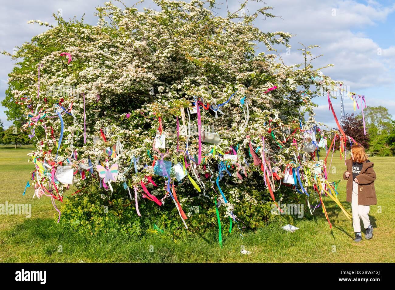 Bristol / UK - Mai 2020 : Kind beim Spaziergang um den Baum der Wünsche im Sneyd Park in Bristol. Dekoriert von den Menschen während des Coronavirus Stockfoto