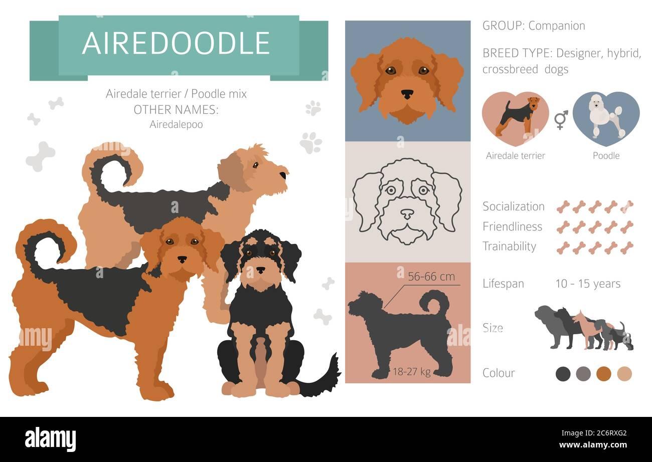 Airedale Terrier Mischling Stockfotos Und Bilder Kaufen Alamy