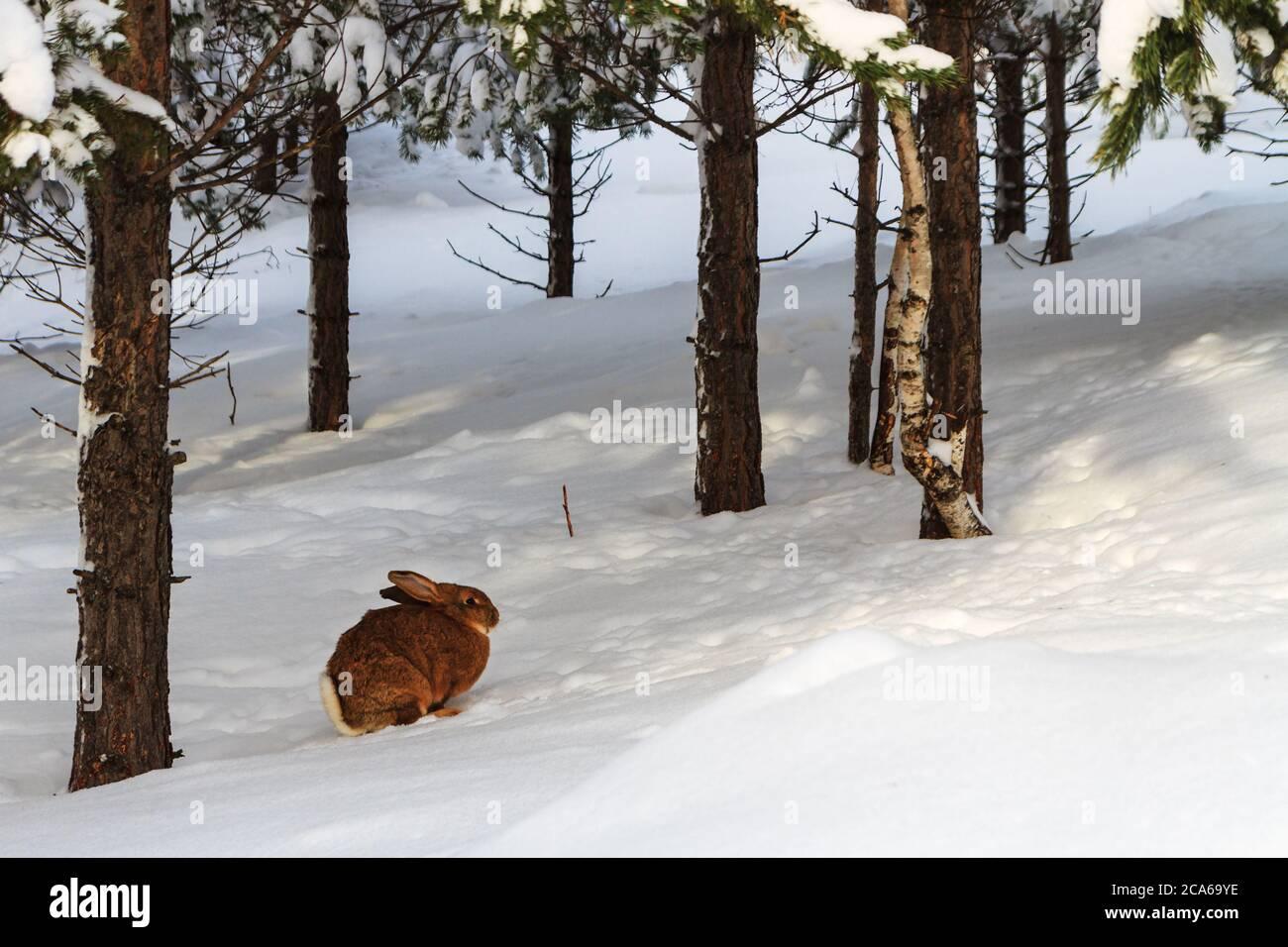 brauner hase stockfotos und bilder kaufen  alamy