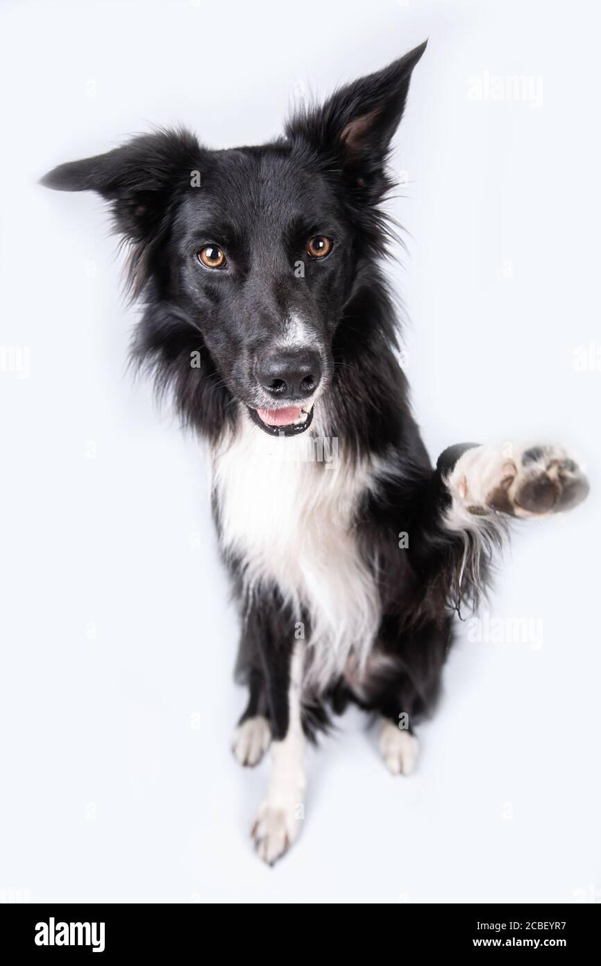 Graue Hundepfoten Stockfotos Und Bilder Kaufen Alamy