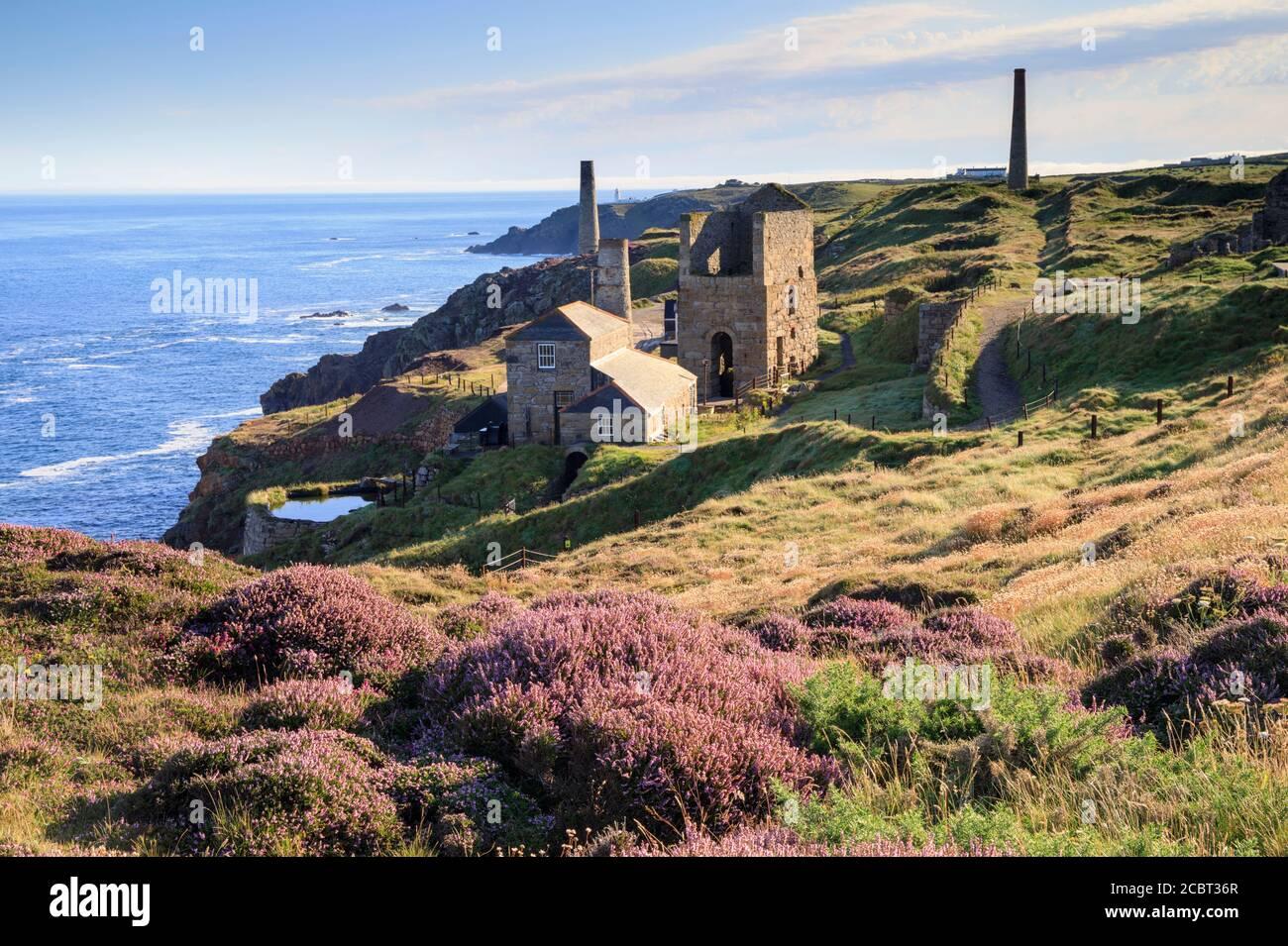 Levant Mine in Cornwall wurde an einem Morgen Anfang August gefangen, als die Heide in Blüte stand. Stockfoto