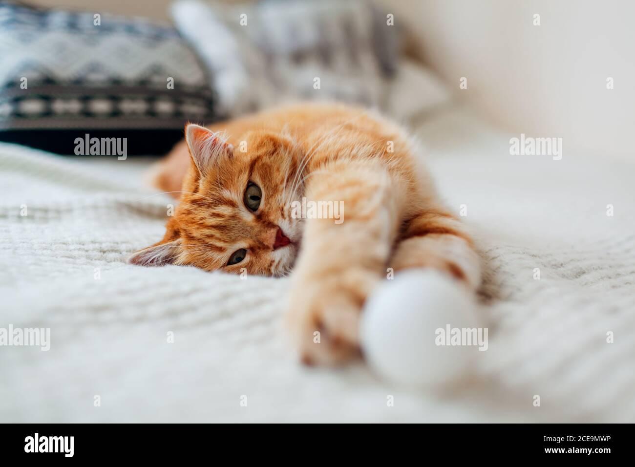 Ginger Katze spielt mit Ball auf der Couch im Wohnzimmer zu Hause. Haustier mit Spaß auf Decke Stockfoto