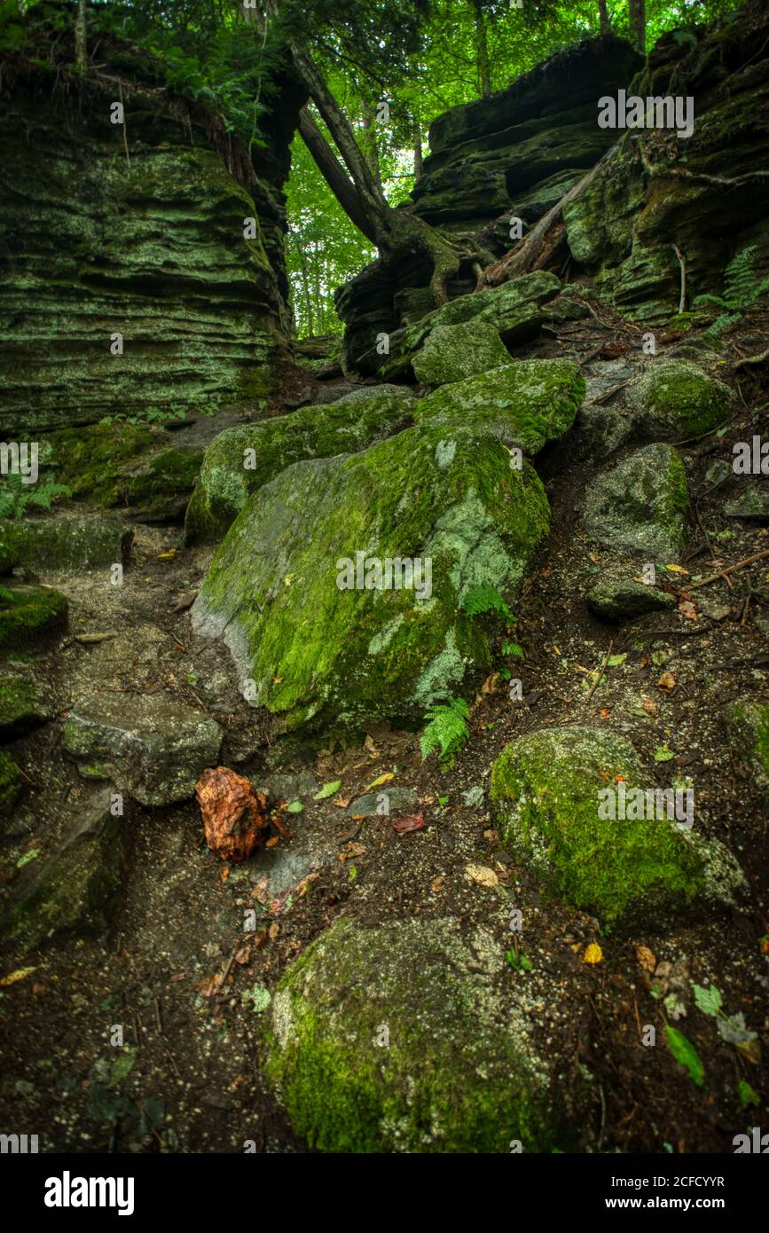 Panama Rocks Scenic Park, Chautauqua County, New York, USA - ein alter versteinerter Wald aus Quarzkonglomerat Stockfoto