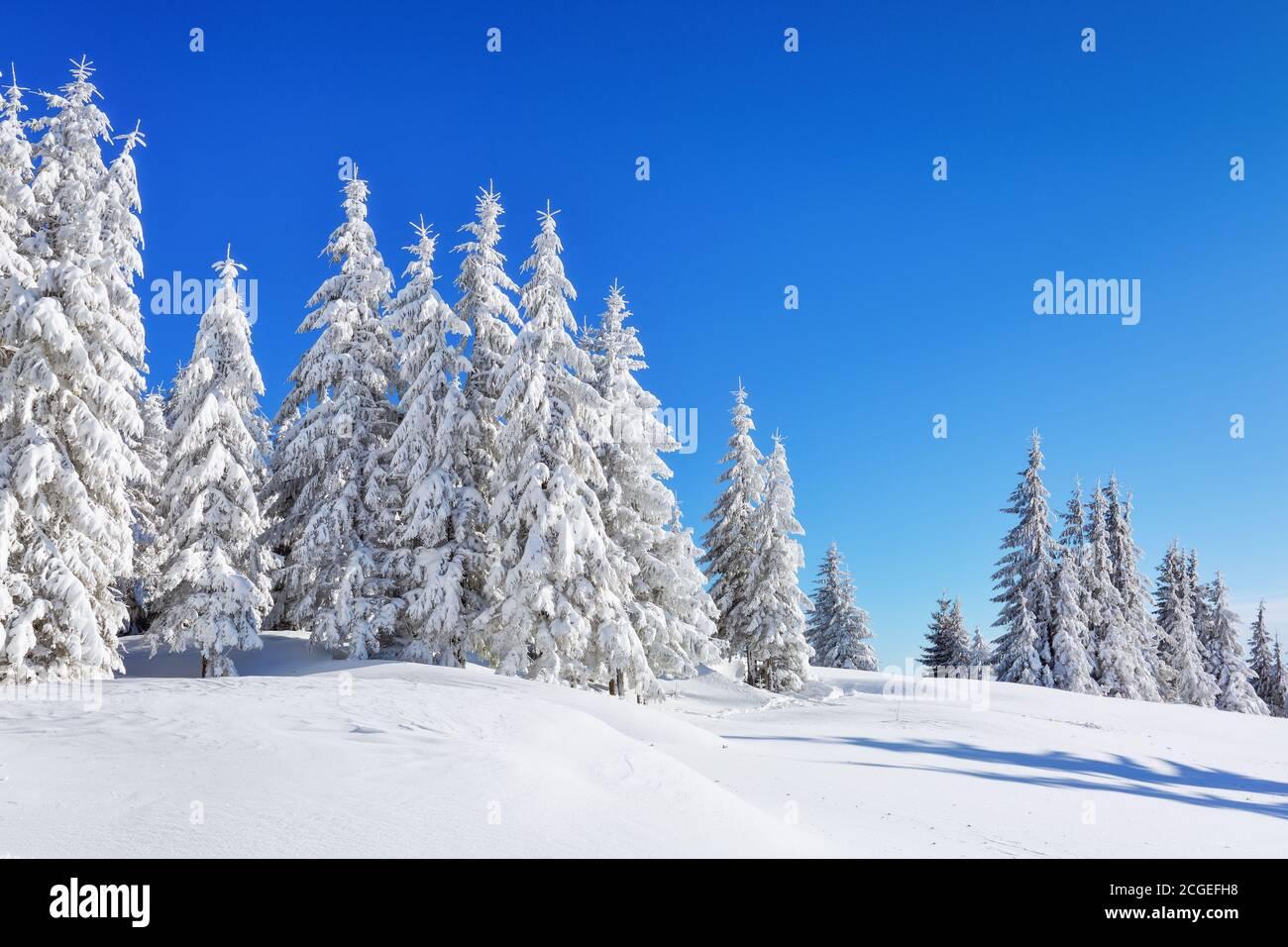 Winterlandschaft. Natürliche Landschaft mit schönen Himmel. Erstaunlich auf dem mit Schnee bedeckten Rasen stehen die schönen Bäume gegossen mit Schneeflocken. Touris Stockfoto