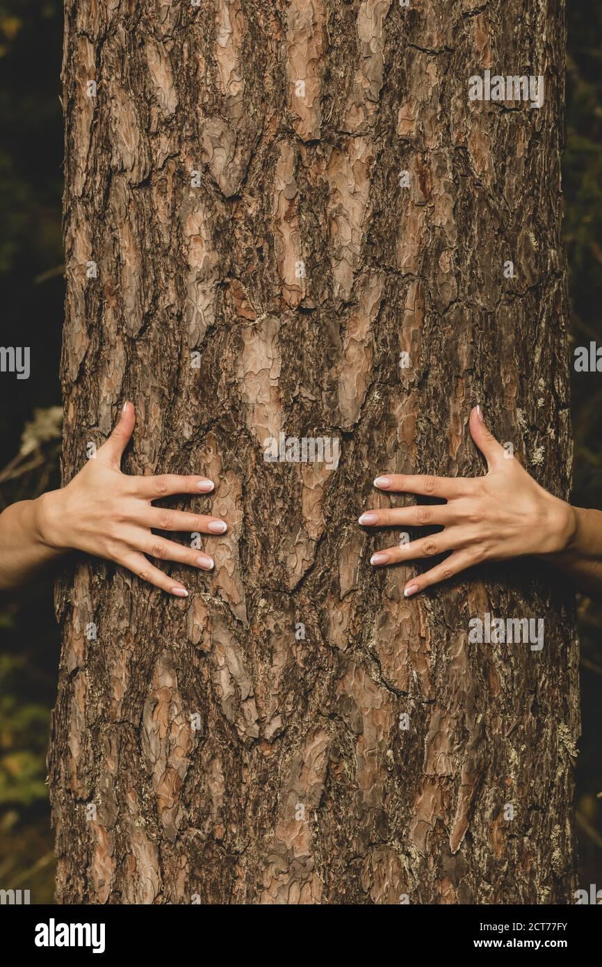 Mensch und Natur Konzept. Frau Hände umarmt Kiefer in dunklem Laub Hintergrund mit Kopie Raum Stockfoto