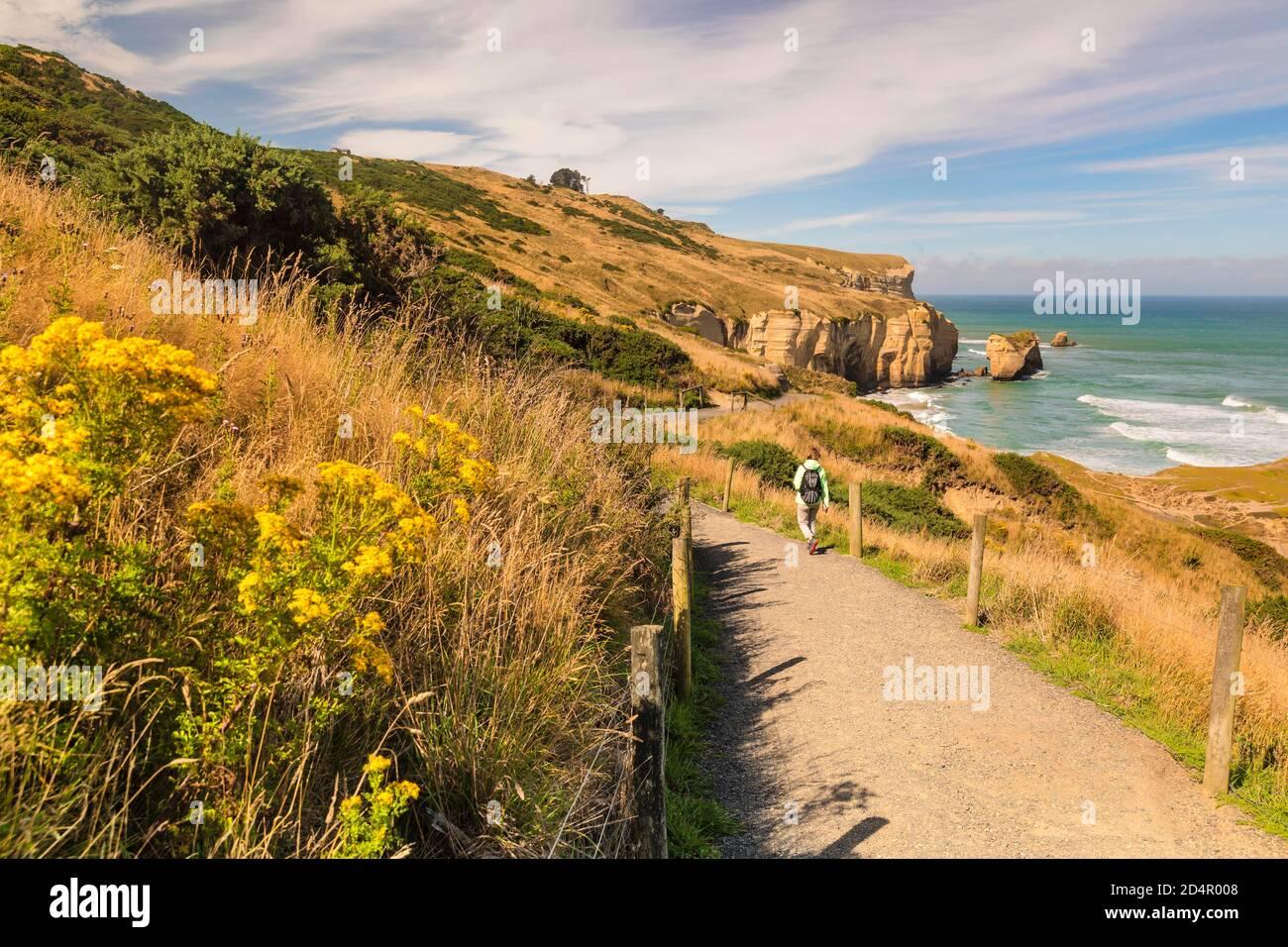 Wanderweg nach Tunnel Beach, Ozeanien, Dunedin, Otago, Südinsel, Neuseeland, Ozeanien Stockfoto