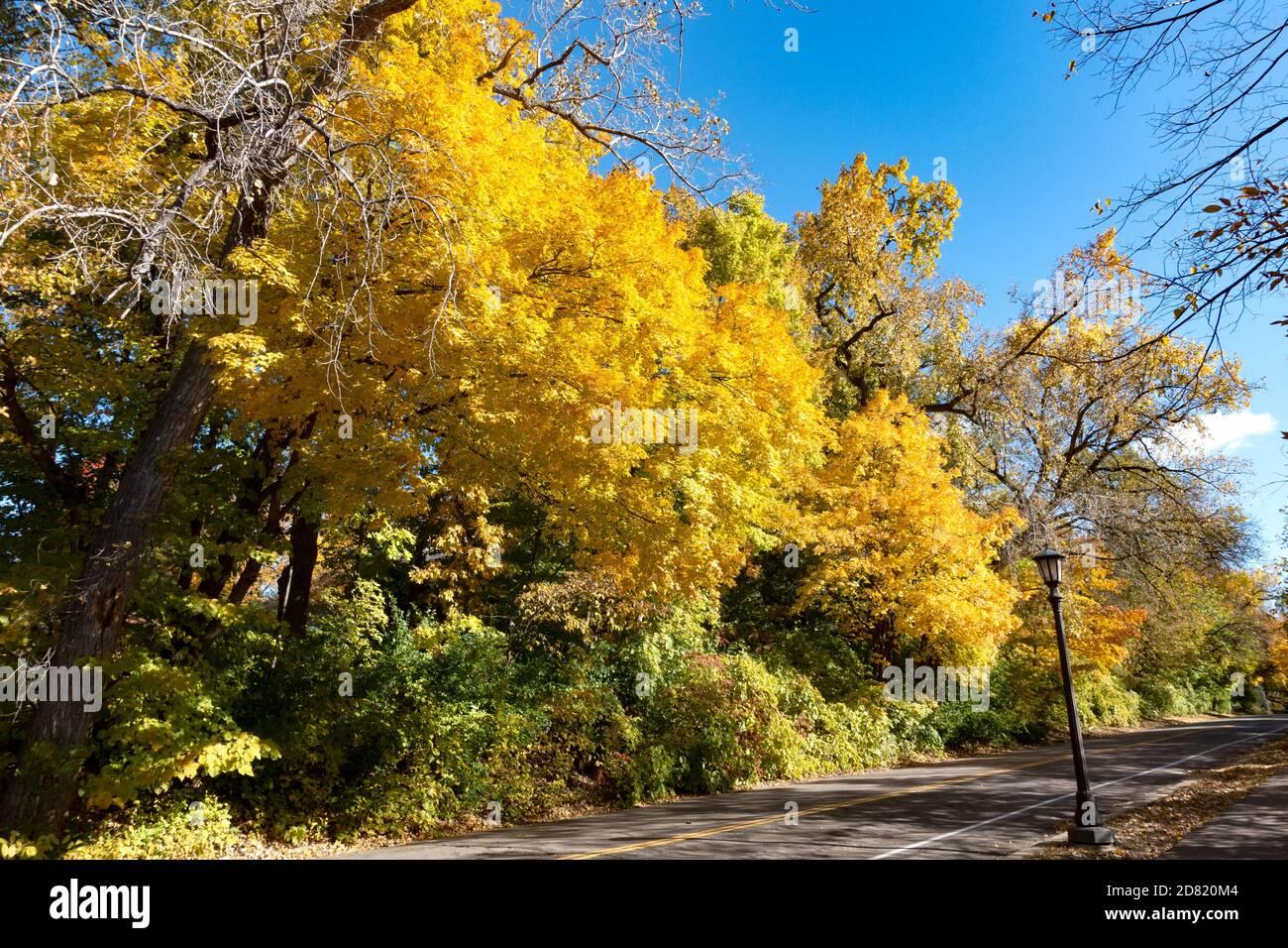 Die Farbe der Herbstbäume ändert sich entlang des North Mississippi River Boulevard Trails. St. Paul Minnesota, USA Stockfoto