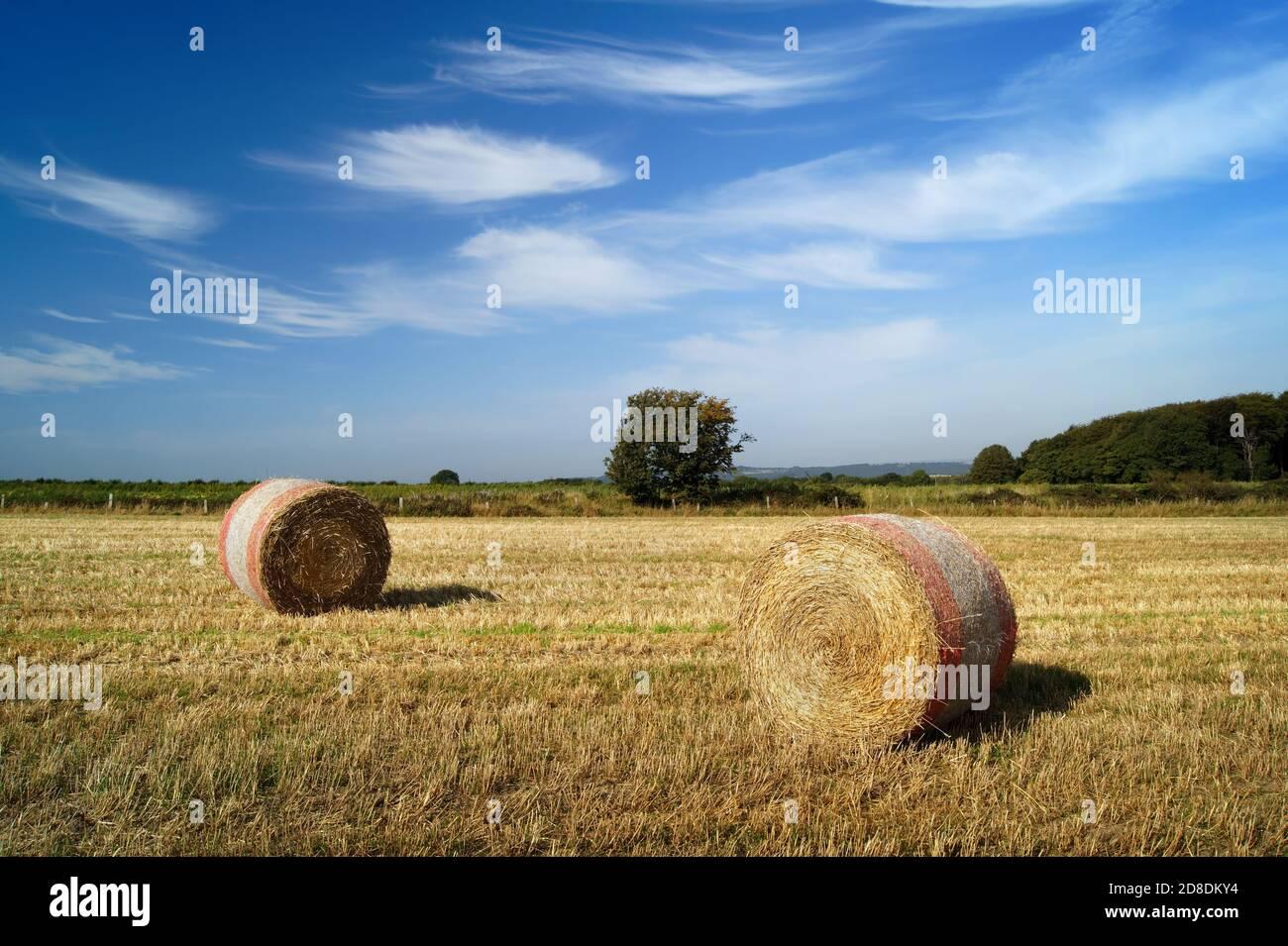 UK, South Yorkshire, Barnsley, Drum Hay Ballen auf dem Feld in der Nähe von Silkstone Common Stockfoto