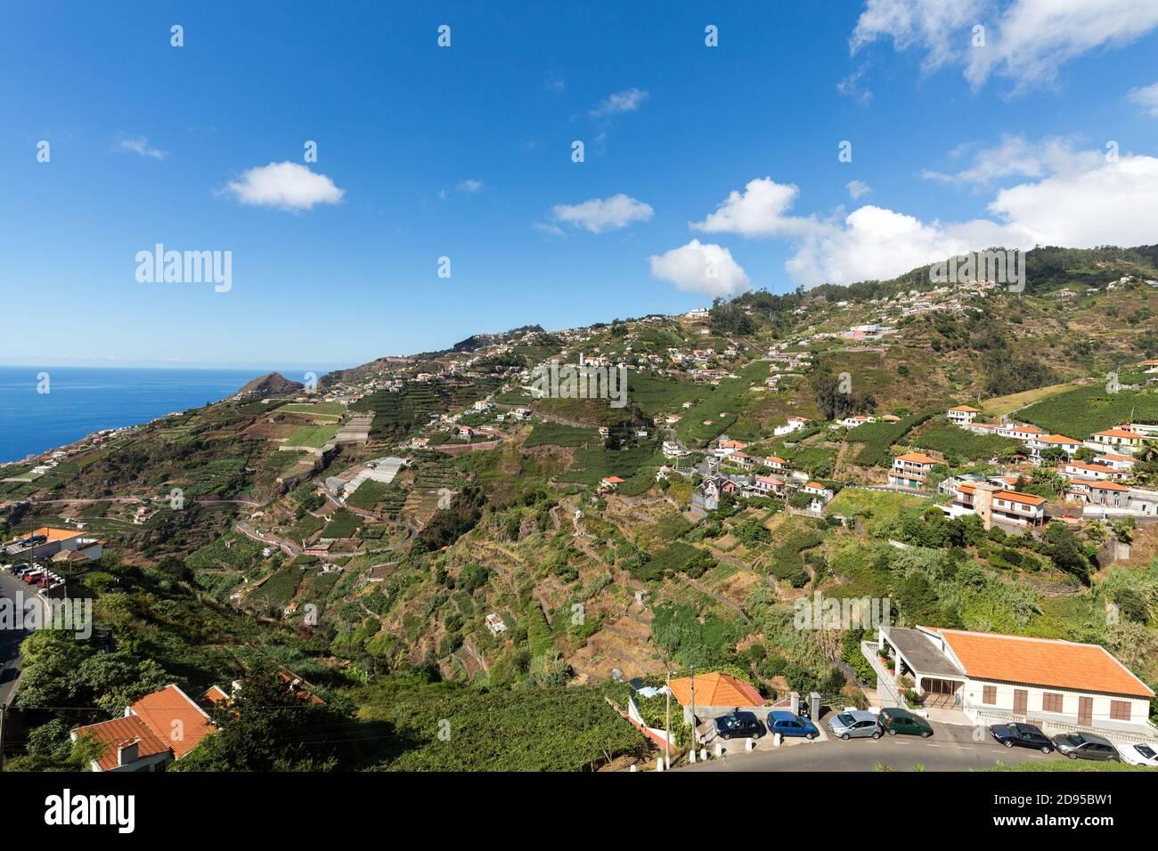 Blick über die Weinberge der Madeira Wine Company, Estreito de Camara de Lobos, Madeira, Portugal Stockfoto