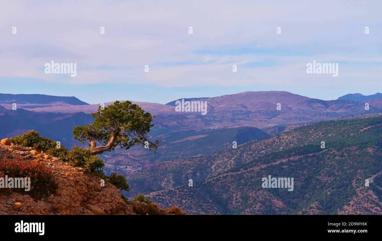 Einsamer verdrehter Baum am Rande der Felsformation cathedrale imsfrane in der Nähe von Tilouguite, Marokko mit den Ausläufern des Atlasgebirges. Stockfoto
