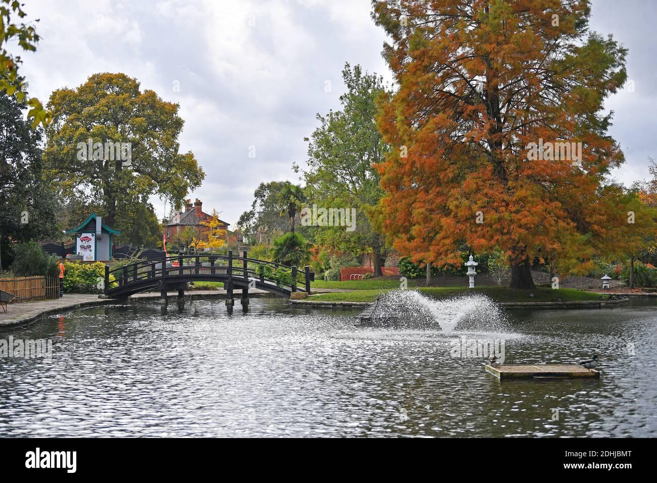 Feature on Stoke Park, Guildford - Herbstfarben, wie die Arbeiten zur Wiederherstellung und Verbesserung der orientalischen Gärten fortgesetzt. Guildford, Surrey. Bild aufgenommen am 20. Oktober 2020 Stockfoto