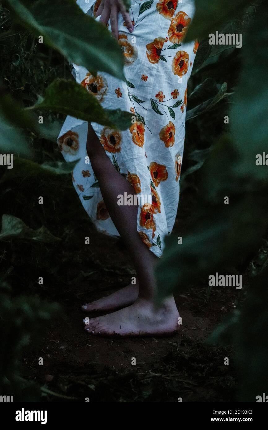 Brunette Frau in Sonnenblumenfeld, Großbritannien Stockfoto