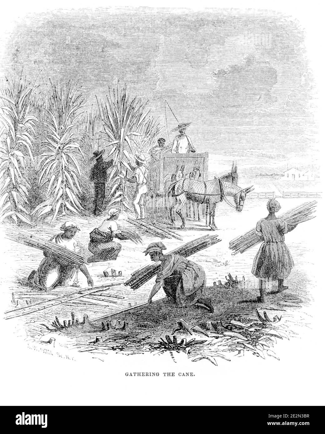 Anbetung Sklave Schwarze Weißer Versklavung von
