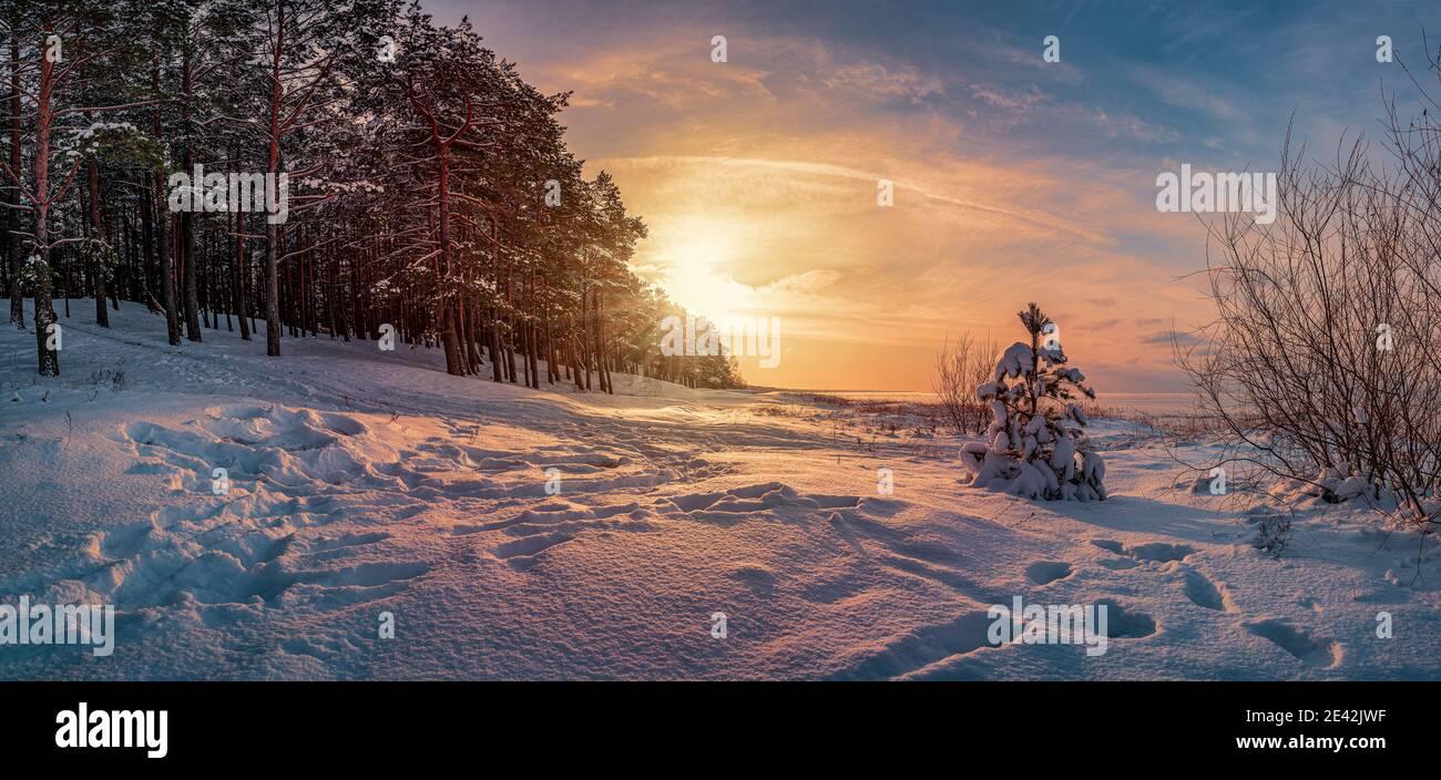 Panoramablick auf Sonnenuntergang über Winterlandschaft mit in Pinien und Tannen bedeckten Bäumen gegen dramatische Abendlicht. Verschneite Ostseeküste. Stockfoto