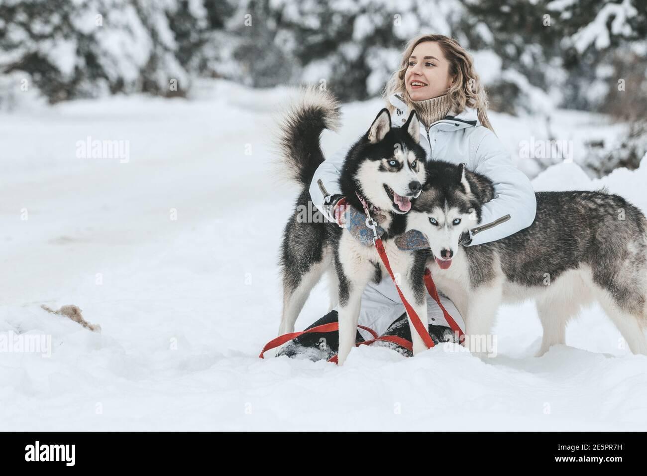 Das Mädchen reitet auf einem Schlitten auf einem Schlitten mit sibirischen Huskies im Winterwald. Haustier. Husky. Husky Art Poster, Husky Print, Stockfoto