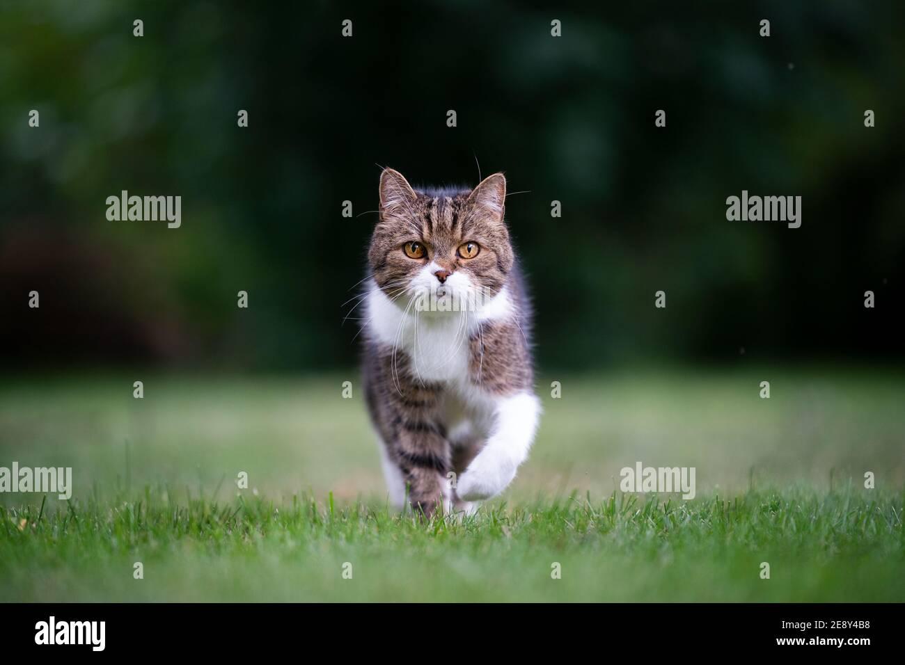 Entschlossene Katze Stockfotos und  bilder Kaufen   Alamy