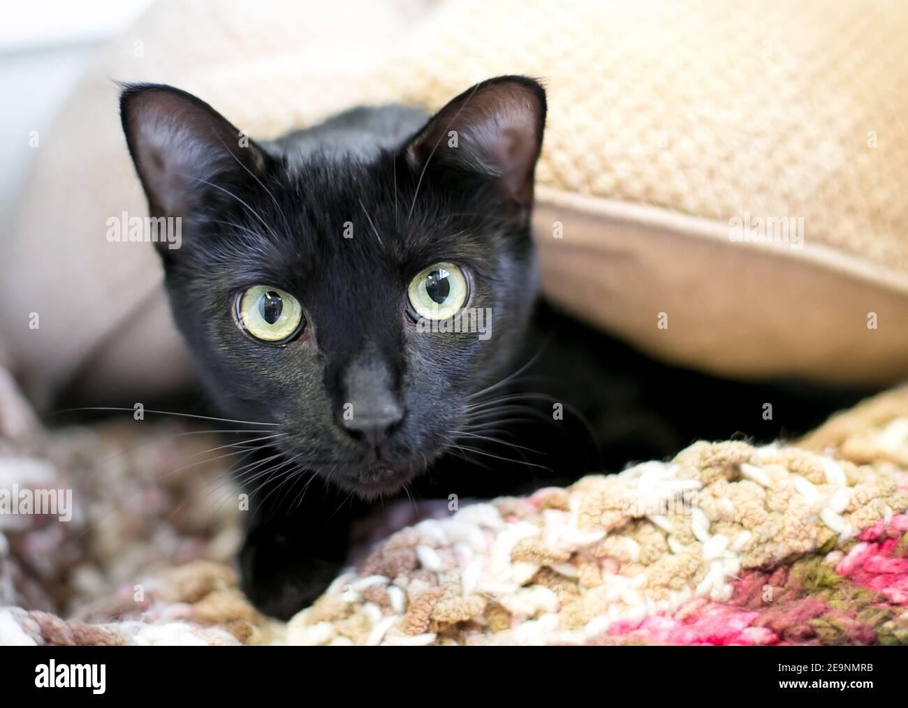 Schüchterne Katze Stockfotos und  bilder Kaufen   Alamy