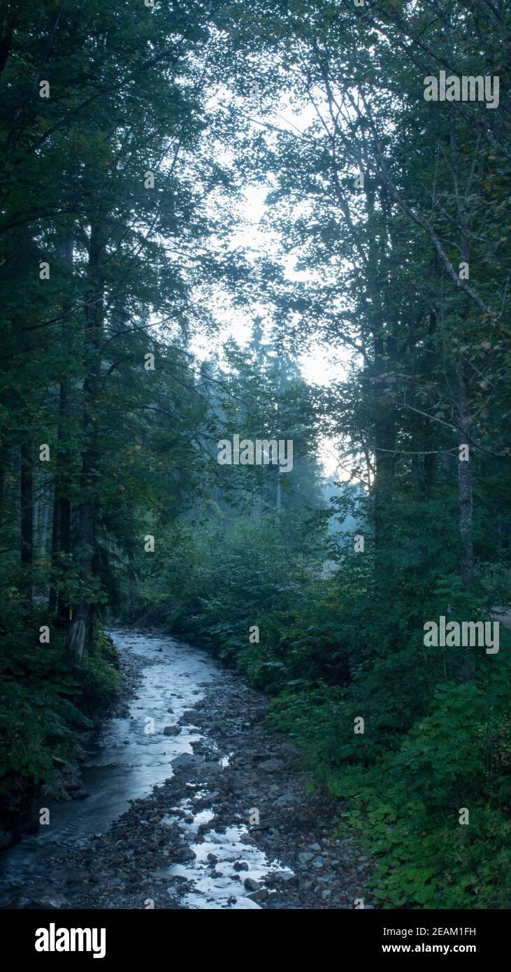 Schöne Landschaft des Gebirgsflusses. Fließen zwischen moosigen Felsen im Wald im Frühling. Bäume in grünem Laub Stockfoto