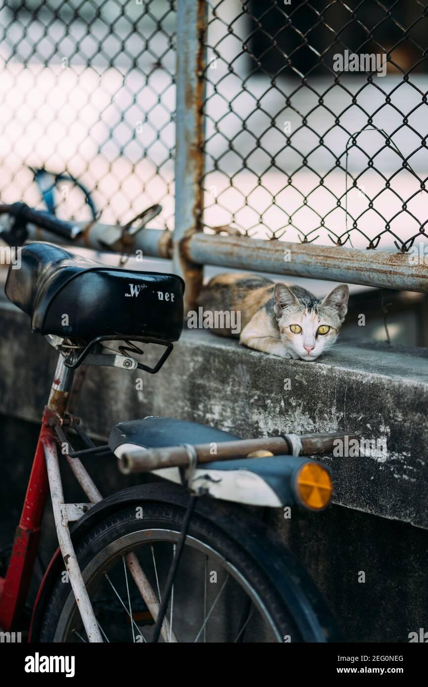 Katze Auf Dem Fahrrad Stockfotos Und Bilder Kaufen Alamy