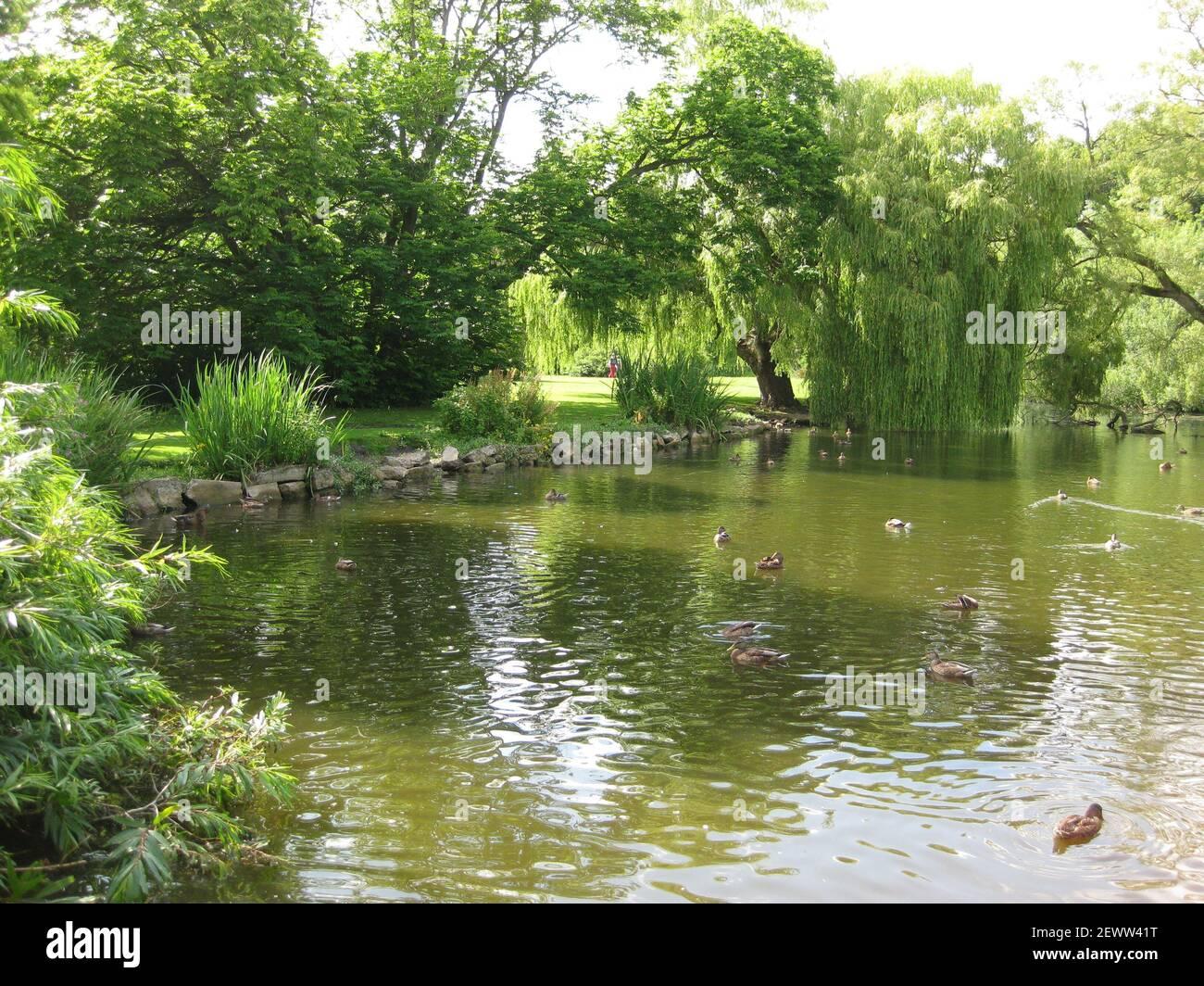 Thwaite Hall Gardens Blick auf den See in Cottingham, East Yorkshire Stockfoto
