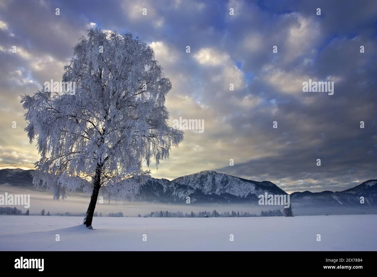 Frostiger und nebliger Sonnenaufgang am Alpenrand, Kochelsee, Bayern starker Raureif in den Bäumen, frostiger und nebliger Sonnenaufgang in der BA Stockfoto