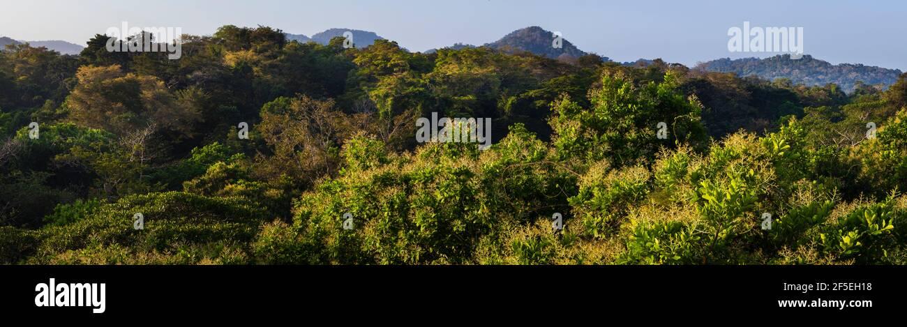 Panoramablick über das Regenwalddach in der frühen Morgensonne, im Soberania Nationalpark, Colon Provinz, Republik Panama. Stockfoto