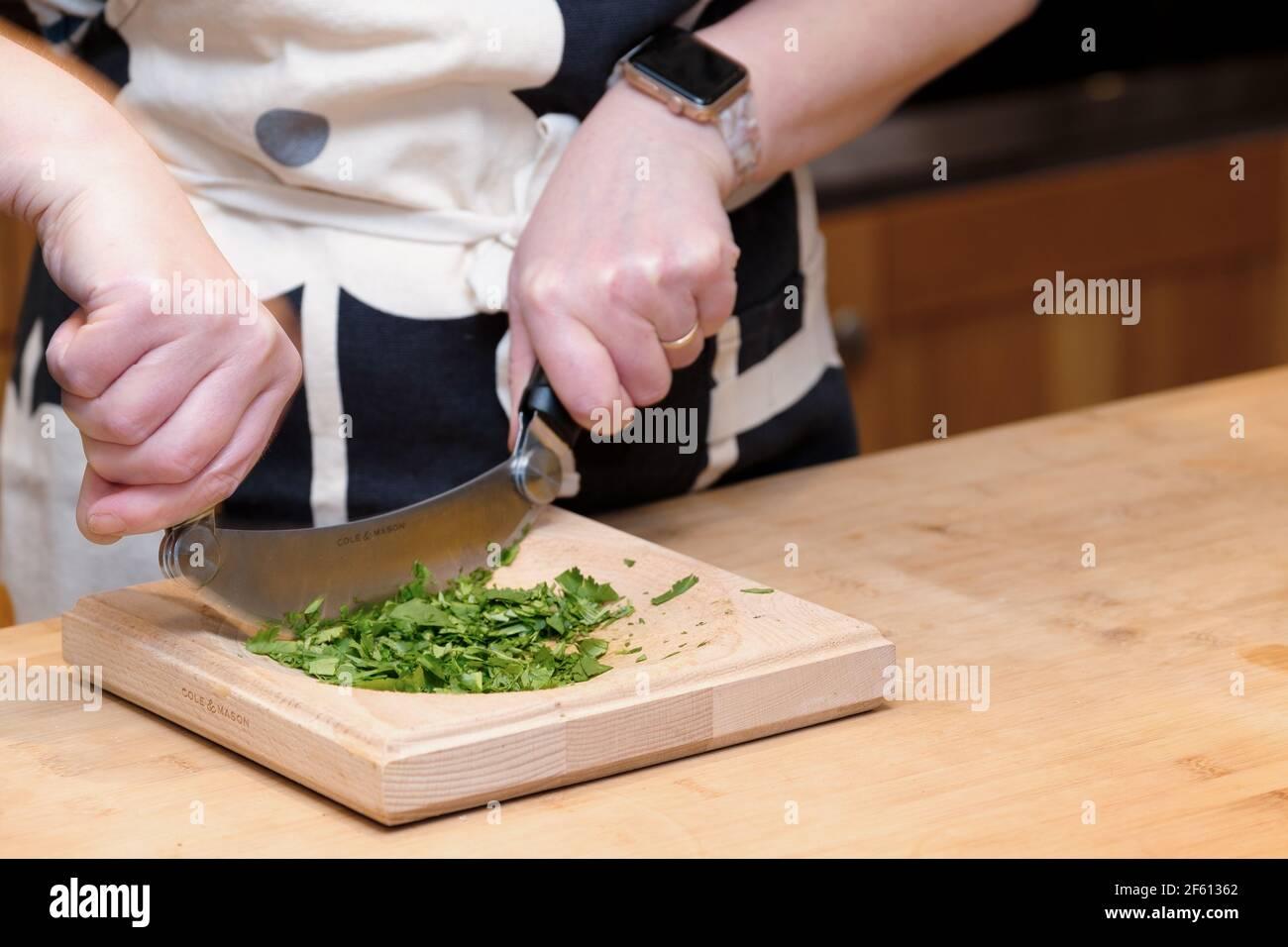 Ein Koch schneidet frisches Kraut, Koriander, Coriandrum sativum, in einer Hausküche mit einem Hachoir oder Ha Chorschneider und Schneidebrett Stockfoto