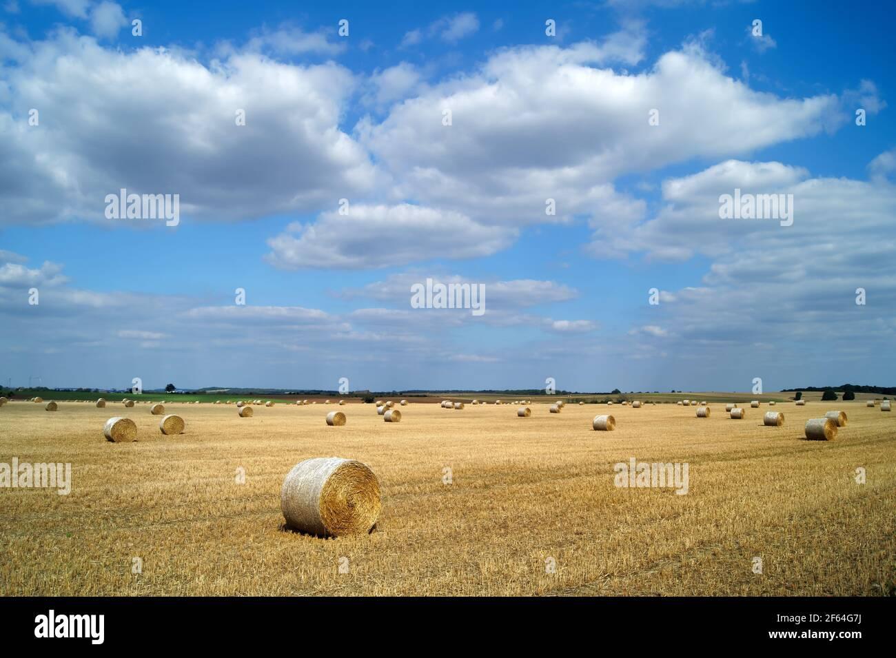 UK, South Yorkshire, Doncaster, Drum Hay Ballen auf dem Feld in der Nähe von High Melton Stockfoto