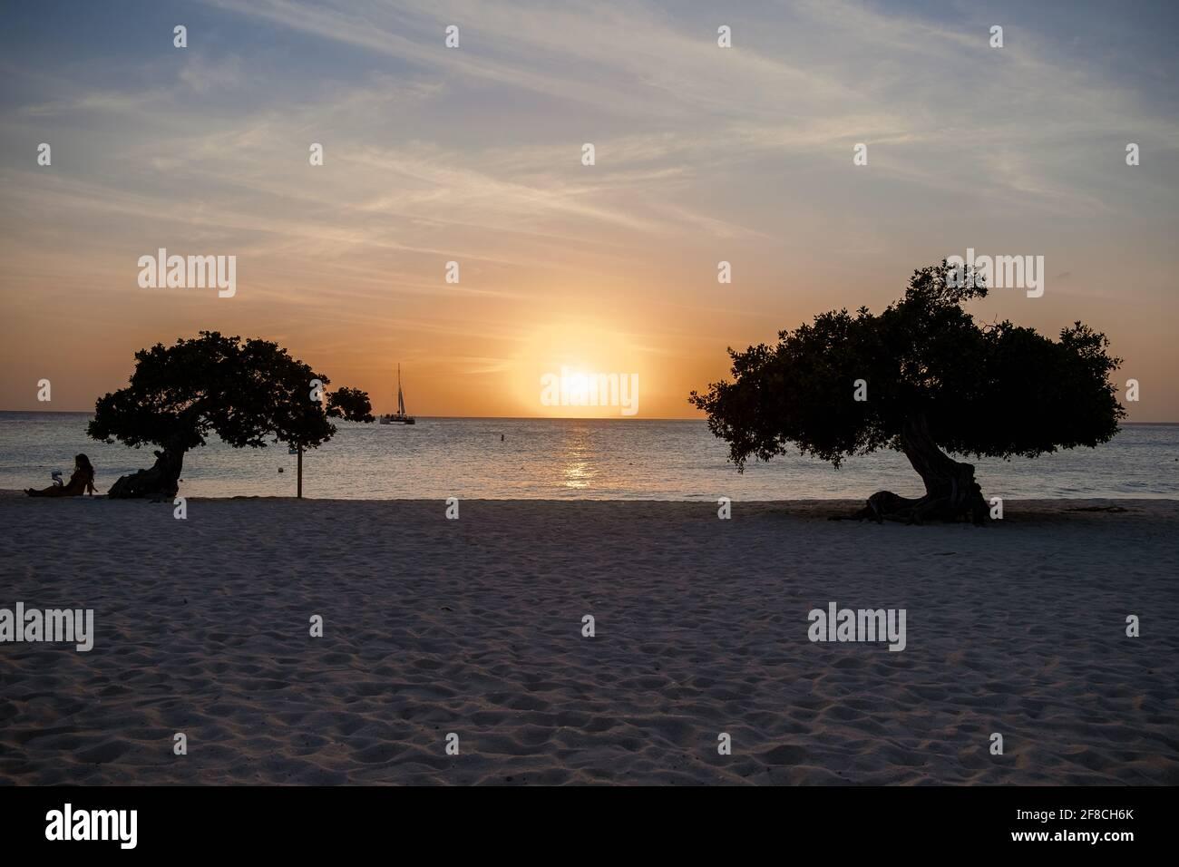 Sonnenuntergang am Eagle Beach Aruba, Divi Tauchen Sie Bäume an der Küste von Eagle Beach in Aruba. Stockfoto