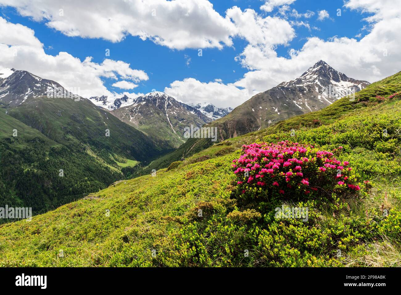 Alpine Berglandschaft mit Alpenrosen und schneebedeckten Gipfeln an einem sonnigen Sommertag. Ötztal Alpen, Tirol, Österreich Stockfoto