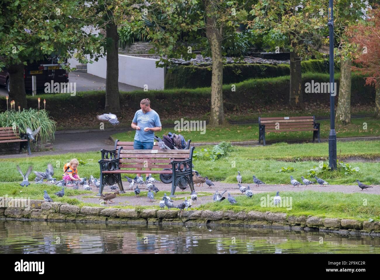 Ein Vater und seine kleine Tochter füttern Tauben in Trenance Gardens in Newquay in Cornwall. Stockfoto